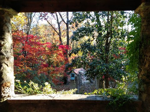 stained-glass-fall-photo